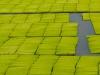 Das ist nicht etwa Reis, sondern trinkbares Gras. Chlorophyll soll gesund sein und schmeckt scheusslich.