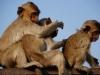 Mich lausen zwei Affen!