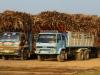 Man riecht sie schon von weitem, die bunten Zuckerrohr-Trucks