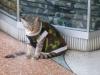 ...die Katze im Tarnanzug schlägt aber alles! Sie sitzt übrigens vor einem Waffengeschäft.