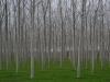Gespenstische Wälder im Friaul