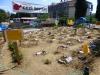 Die armen Pflanzen vom Gezi-Park hängen schon am Tropf
