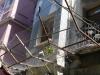Diese unglückliche Zimmerpflanze konnte dank Netz vor dem Suizid bewahrt werden