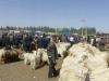 Das Gelände ist riesig mit Sektionen für Schafe, Ziegen, Kühe und Stiere, Esel, Pferde und sogar Kamele
