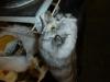 Zur grossen Erleichterung der Füchse sind auch in China Mantafahrer aus der Mode gekommen