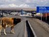 ...da macht sogar die Kuh Muh!
