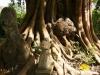Wer steht schon länger da, der Baum oder der Buddha?