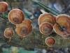 Im Urwald wachsen nicht nur lustige Pilze...