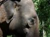 Herr Elefant im Porträt