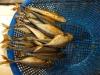 Fischers Fritz frittiert frische Fische