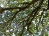 Ein Baum, Herberge für eine Hundertschaft weiterer tierischer und pflanzlicher Bewohner