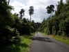 Die Nordinsel begrüsst uns mit dichtem Urwald