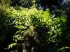 ...desto grüner wirds im (Regen-) Wald