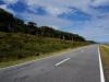 Die Küstenstrasse im Westen der Südinsel ist von einem grünen Buschwall gesäumt