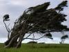 Man kann die vorherrschende Windrichtung knapp erahnen