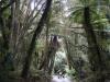 Aus der beliebten Serie 'Die unheimlichen Bewohner des Urwalds'