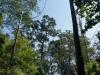 Ein Zwergli und sieben Baumriiiiiiiiiesen