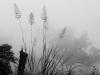 Der Mae Hong Son Loop beschert uns nicht nur steile Berge, sondern auch Nebel
