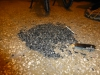 ...hat bei uns leider nichts genützt, ab Abend grübeln wir in mühseliger Kleinarbeit rund 2kg Teer und Steine aus unseren Pneus