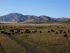 Alle Zutaten fürs tibetische Plateau vorhanden: Grasland, Yaks, Schafe, Berge und blauer Himmel