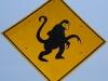 Von den neugierigen Affen am Strassenrand...