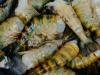 ...und getigerte Shrimps...