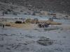 Der Afghane beziehungsweise sein Ochse trennt die Spreu vom Weizen...