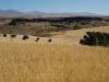 Güldene Kornfelder, wohin das Auge reicht...