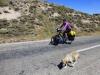 Endlich einer, der nicht bellt, sodern freudig wedelnd mitkommt: Fido begleitet uns den ganzen steilen Berg hoch